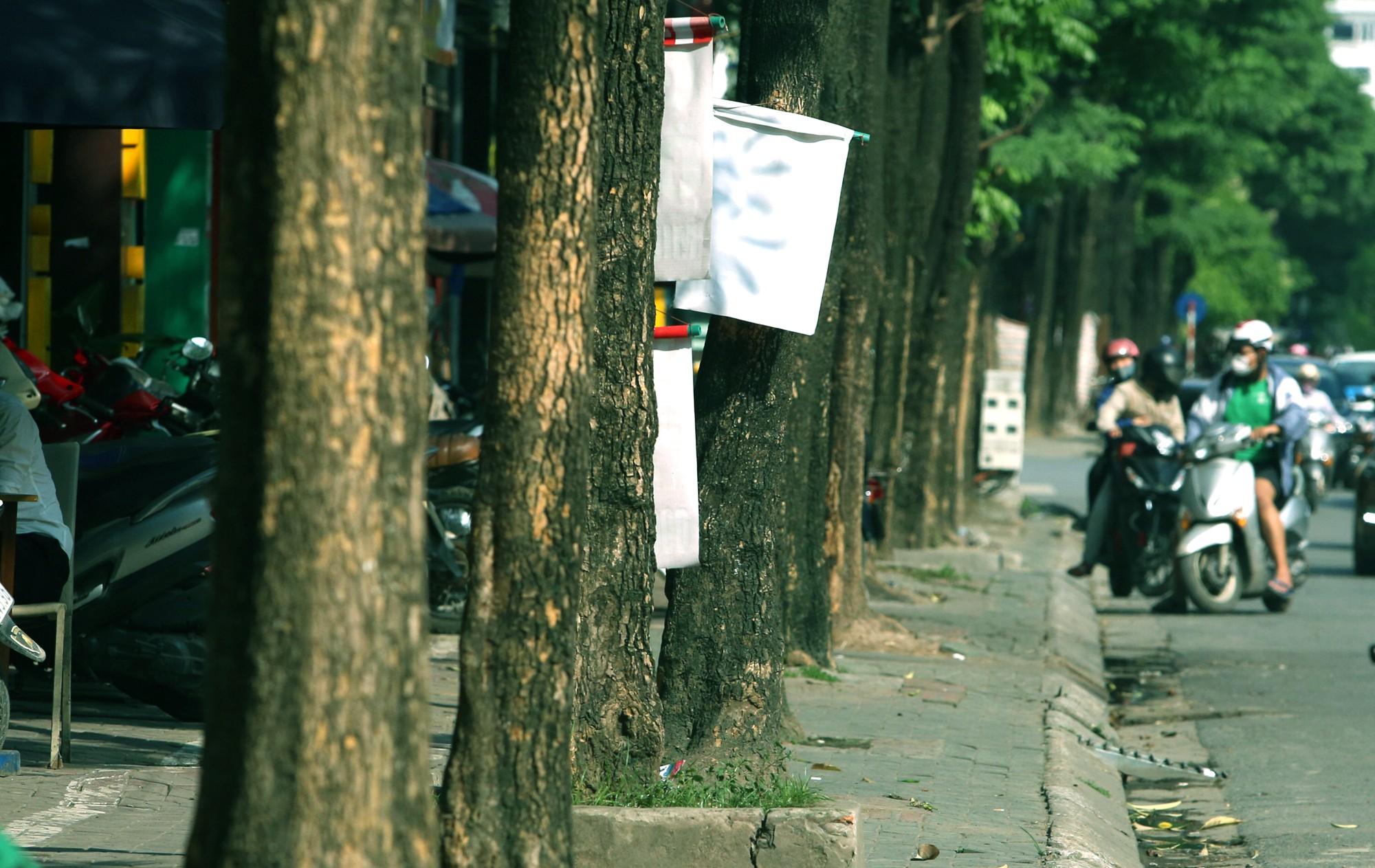 Hà Nội: Đầu hè, hoa sữa bất ngờ nở trên nhiều tuyến phố  - Ảnh 3.