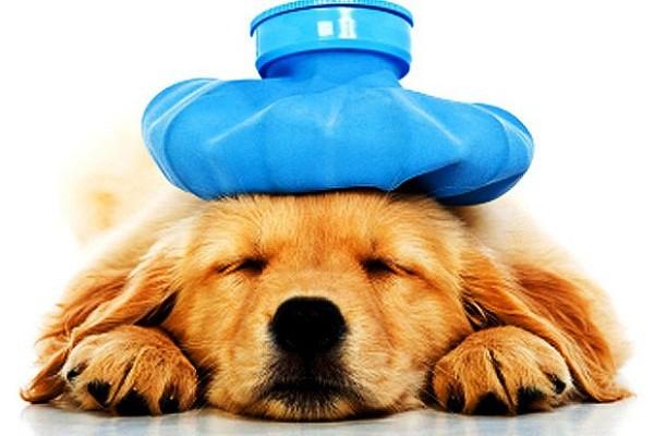 Những điều cần biết về bệnh viêm đường ruột truyền nhiễm Parvovirus ở chó - Ảnh 1.