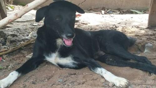 Chú chó cứu bé sơ sinh bị chôn sống trên cánh đồng Thái Lan - Ảnh 1.