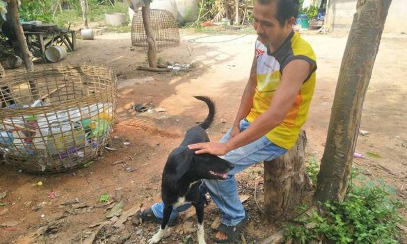 Chú chó cứu bé sơ sinh bị chôn sống trên cánh đồng Thái Lan - Ảnh 2.