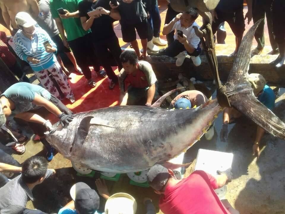 Ngư dân Khánh Hòa câu được cá ngừ siêu khủng hơn 380kg - Ảnh 1.