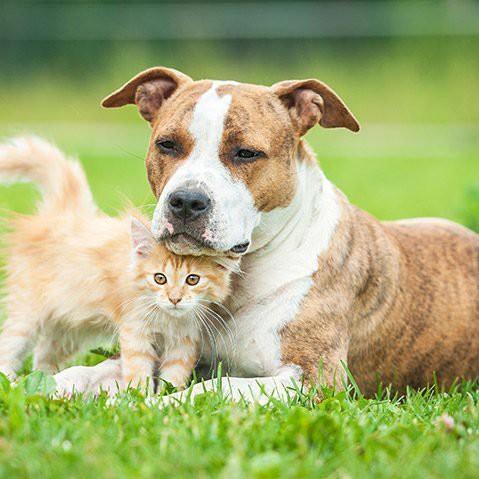 Những vấn đề cần suy nghĩ trước khi nuôi thú cưng trong nhà - Ảnh 1.