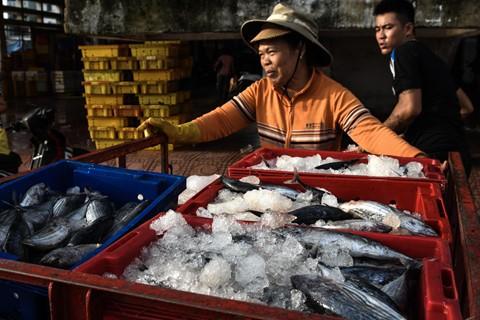 Nhọc nhằn kiếm sống bên chảo lửa hấp cá ở cảng Quy Nhơn - Ảnh 2.