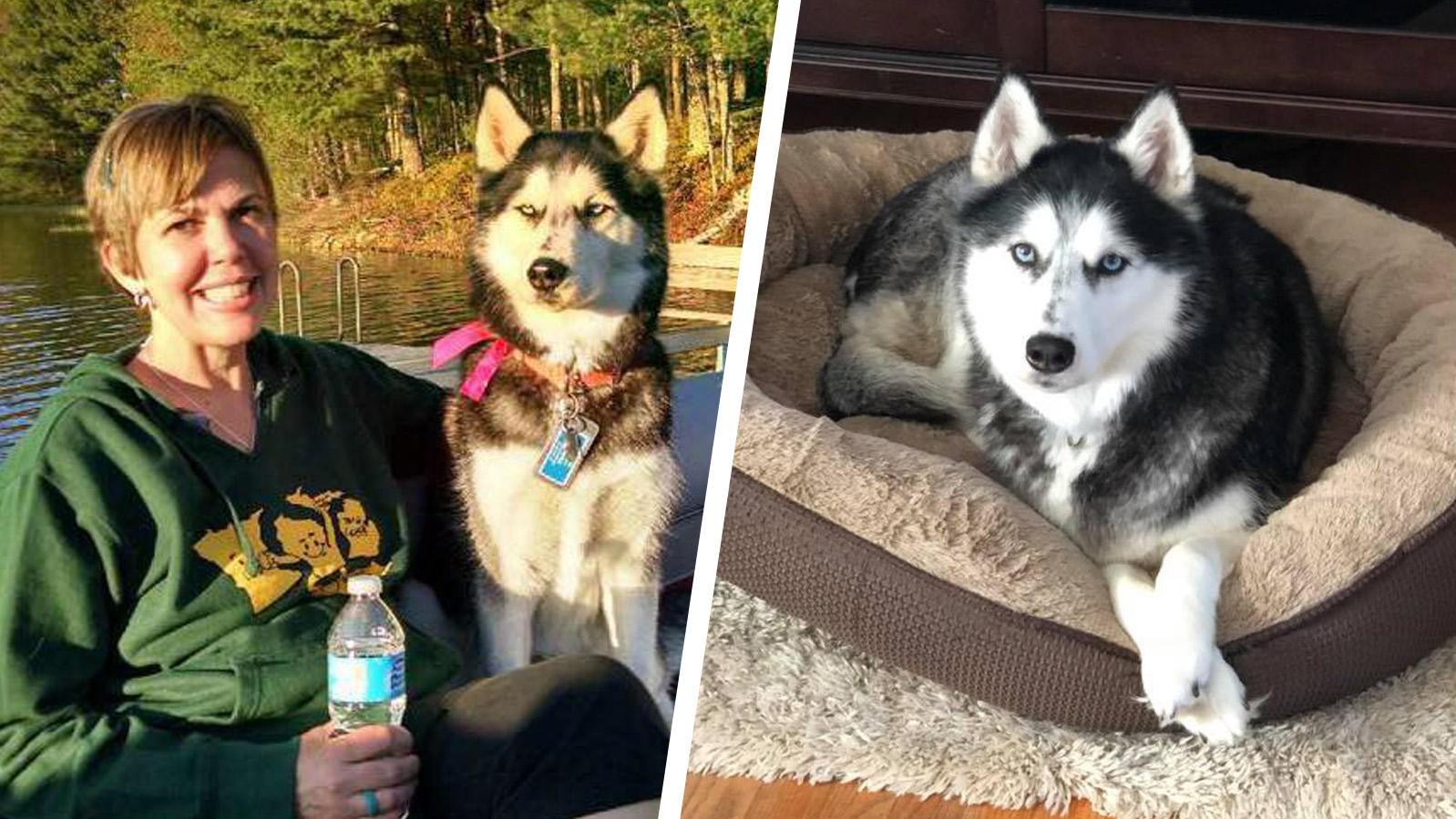 Chú chó Siberia Husky 3 lần phát hiện bệnh ung thư cứu sống chủ nhân của mình - Ảnh 2.