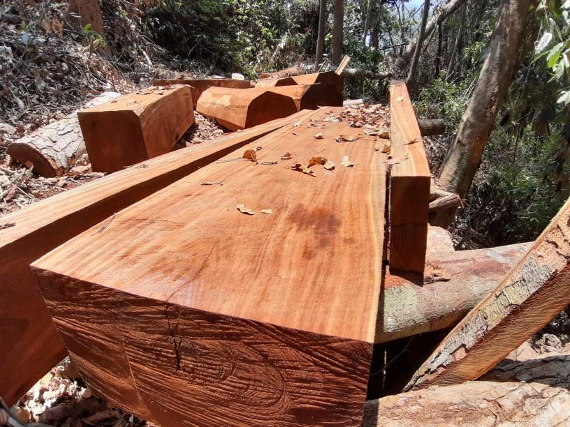 Lâm tặc xẻ thịt hàng nghìn khối gỗ trái phép trong rừng Quảng Nam - Ảnh 1.