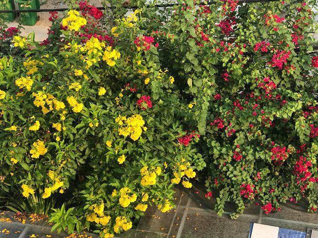 Ngắm căn biệt thự sang trọng ngập tràn hoa lá của Hồ Ngọc Hà - Ảnh 11.