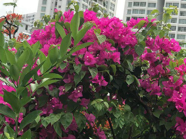 Ngắm căn biệt thự sang trọng ngập tràn hoa lá của Hồ Ngọc Hà - Ảnh 12.