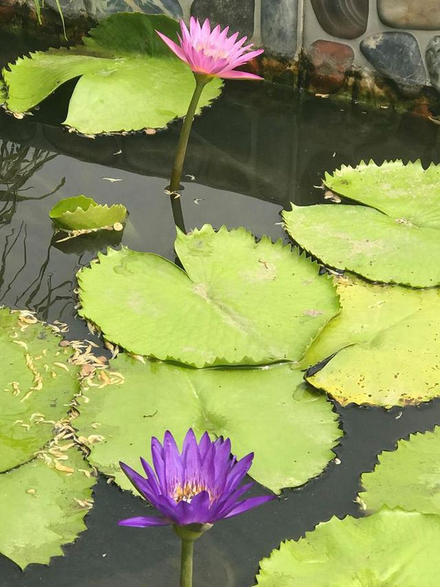 Ngắm căn biệt thự sang trọng ngập tràn hoa lá của Hồ Ngọc Hà - Ảnh 13.