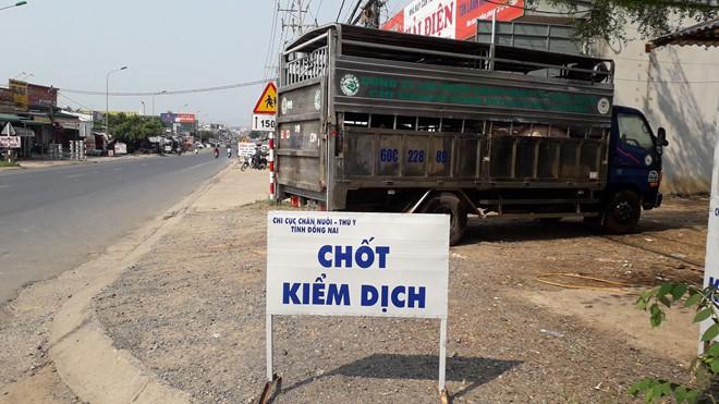 Thông tin dịch tả châu Phi vừa xuất hiện ở Đồng Nai, giá heo hơi từ hơn 40.000 đồng rớt chỉ còn hơn 30.000 đồng/kg  - Ảnh 2.
