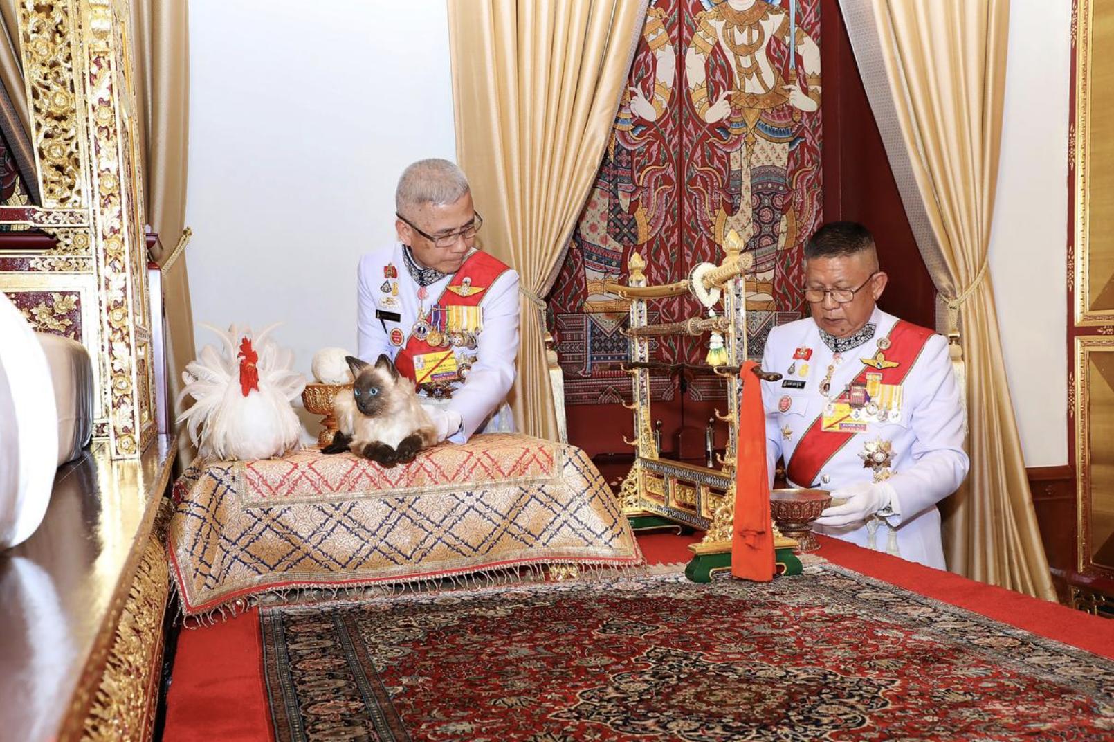 Tranh cãi về chú mèo xuất hiện trong lễ đăng quang của nhà vua Thái Lan - Ảnh 1.