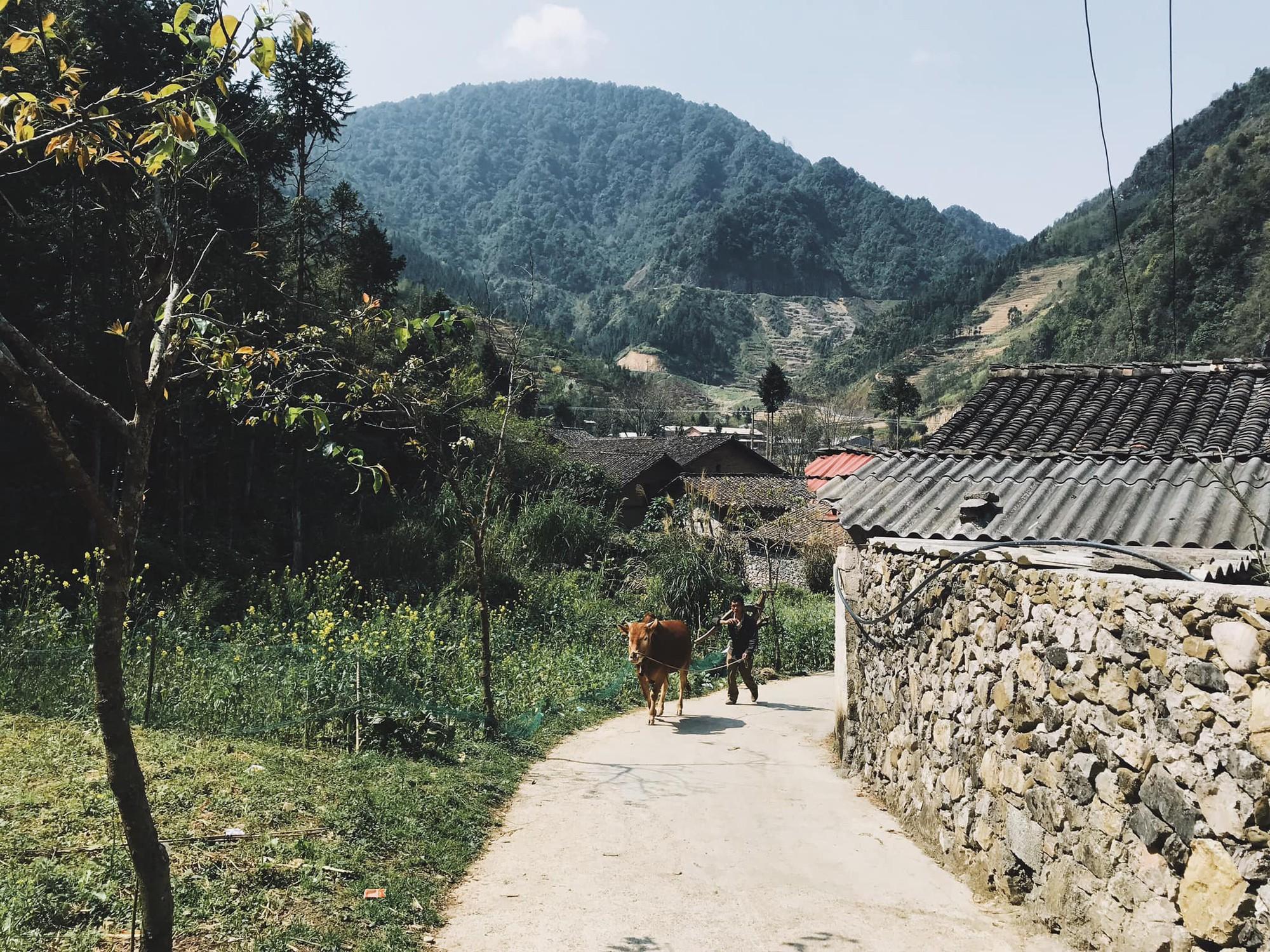 Du lịch gia đình trong 3 ngày vào mùa hè nên đi Hà Giang hay Mộc Châu? - Ảnh 3.