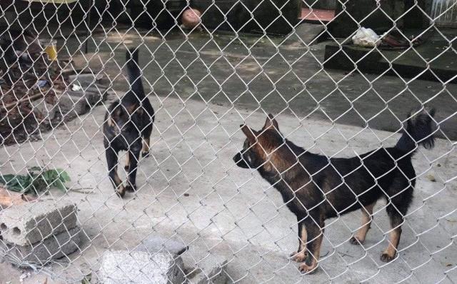 Khởi tố vụ án bé trai 7 tuổi bị đàn chó tấn công tử vong ở Hưng Yên - Ảnh 1.