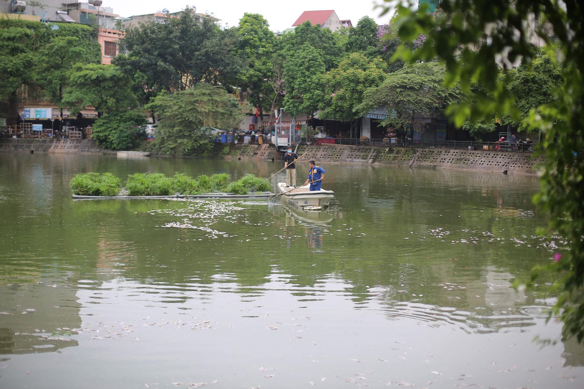 Hà Nội: Cá chết ở hồ Văn Chương khiến cư dân quanh hồ không dám thở - Ảnh 1.