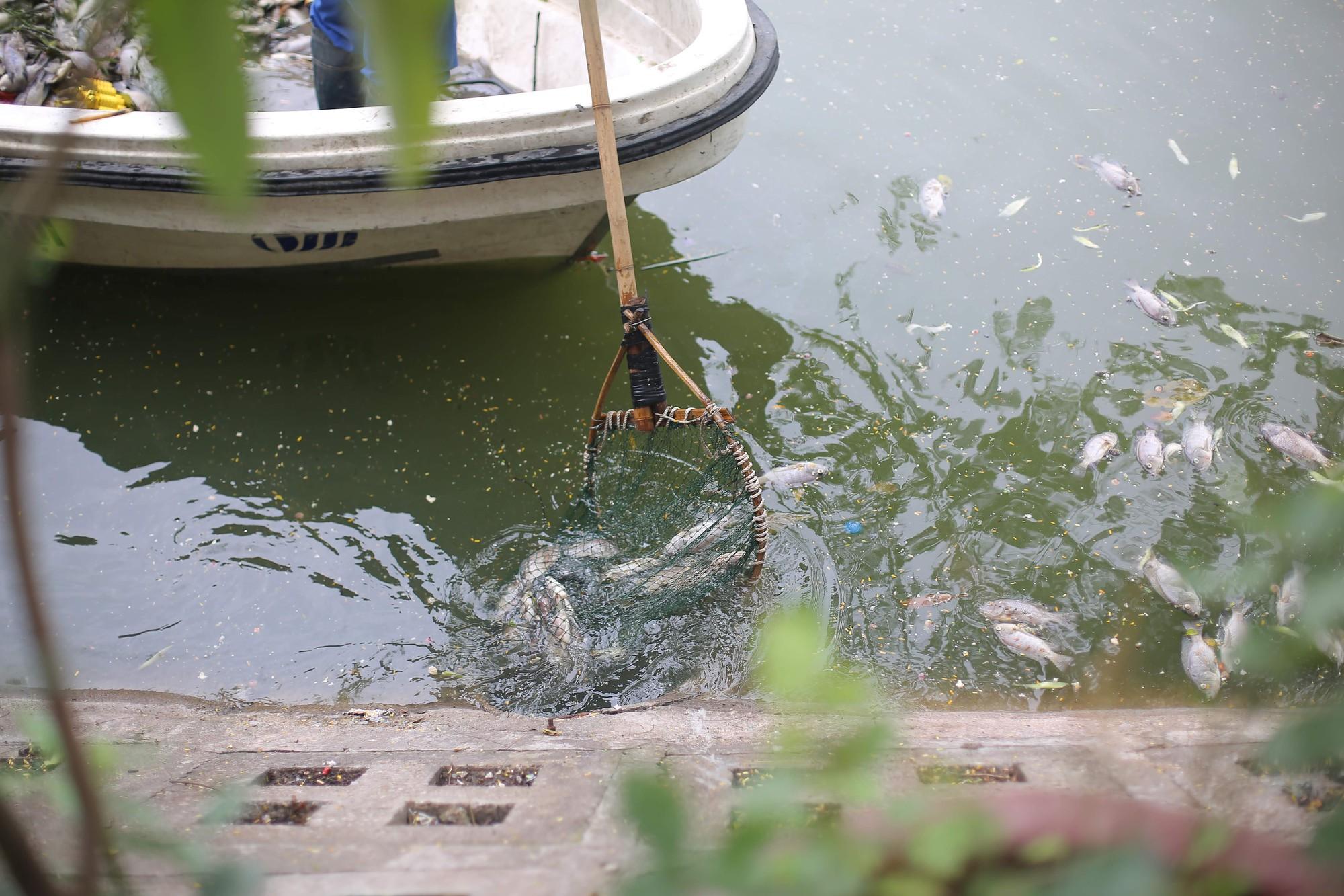 Hà Nội: Cá chết ở hồ Văn Chương khiến cư dân quanh hồ không dám thở - Ảnh 8.