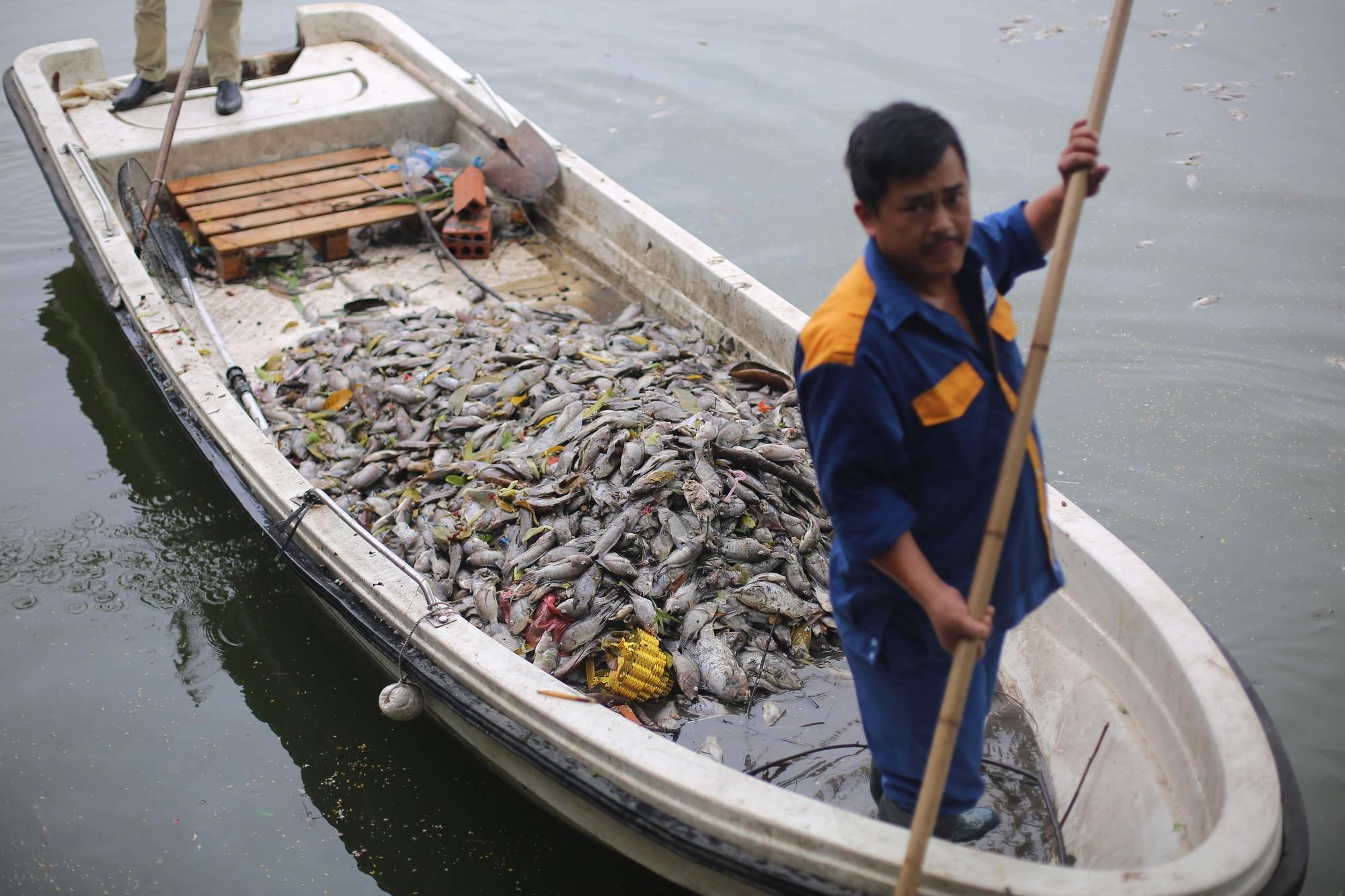 Hà Nội: Cá chết ở hồ Văn Chương khiến cư dân quanh hồ không dám thở - Ảnh 6.