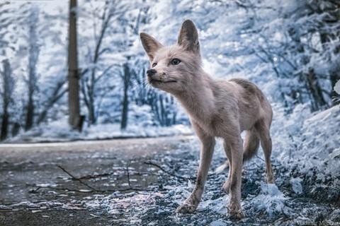 Vùng đất chết Chernobyl hóa xứ thần tiên qua ống kính nhiếp ảnh gia - Ảnh 1.
