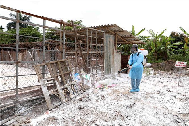 Khánh Hòa: Thiêu hủy hơn 100 con heo bị dịch tả heo châu Phi - Ảnh 1.