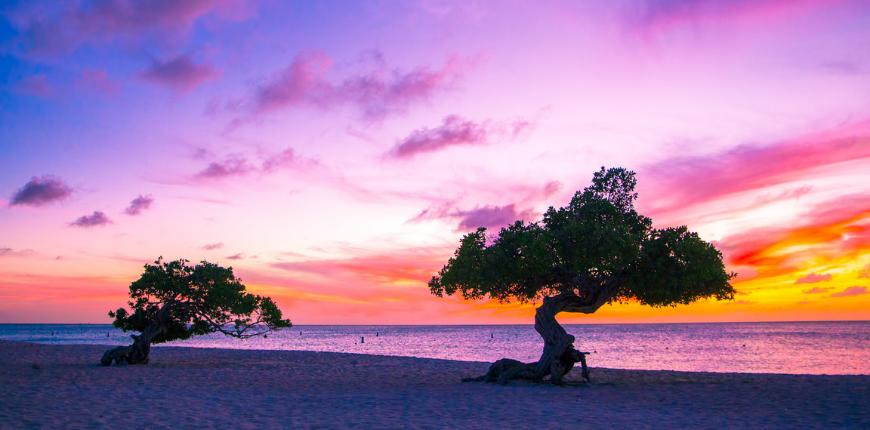 aruba-beach-divi-divi-trees