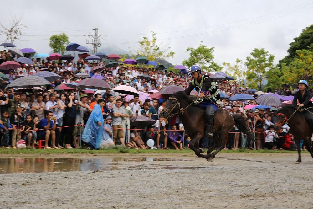 'Vó ngựa trên mây' - giải đua ngựa lần đầu tiên được tổ chức tại Fansipan - Ảnh 3.