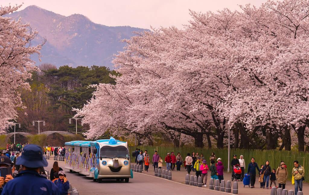 7 lưu ý quan trọng khi chuẩn bị du lịch Hàn Quốc - Ảnh 2.