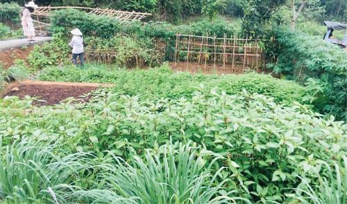 Hà Nội rộ mô hình cho thuê đất trồng rau - Ảnh 1.