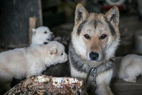 Chợ thịt chó nổi tiếng Hàn Quốc chính thức đóng cửa - Ảnh 1.