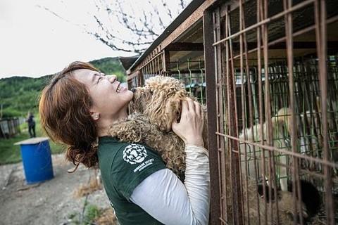 Chợ thịt chó nổi tiếng Hàn Quốc chính thức đóng cửa - Ảnh 10.