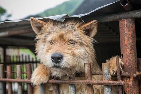 Chợ thịt chó nổi tiếng Hàn Quốc chính thức đóng cửa - Ảnh 2.
