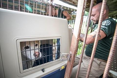 Chợ thịt chó nổi tiếng Hàn Quốc chính thức đóng cửa - Ảnh 3.