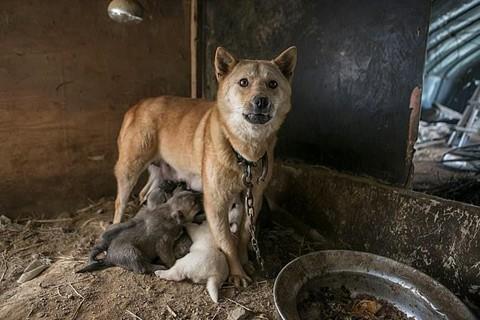 Chợ thịt chó nổi tiếng Hàn Quốc chính thức đóng cửa - Ảnh 4.