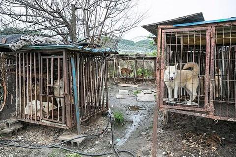 Chợ thịt chó nổi tiếng Hàn Quốc chính thức đóng cửa - Ảnh 5.