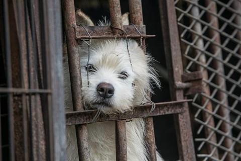 Chợ thịt chó nổi tiếng Hàn Quốc chính thức đóng cửa - Ảnh 6.