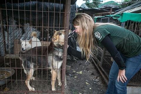Chợ thịt chó nổi tiếng Hàn Quốc chính thức đóng cửa - Ảnh 7.