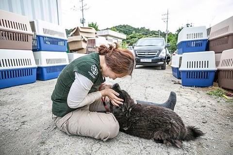 Chợ thịt chó nổi tiếng Hàn Quốc chính thức đóng cửa - Ảnh 8.