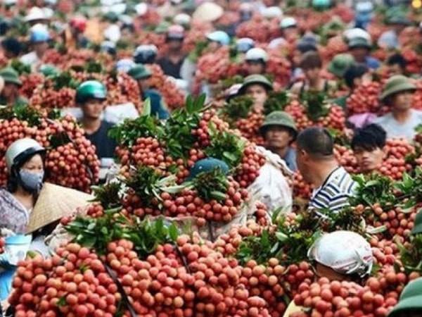 Trung Quốc chỉ mua trái cây Việt Nam… không có lá? - Ảnh 1.