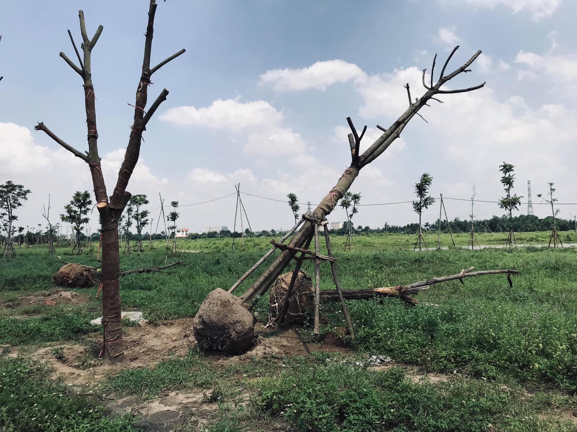 Hàng nghìn tỉ đồng bị chôn vùi tại khu đô thị bỏ hoang Minh Giang Đầm Và - Ảnh 17.