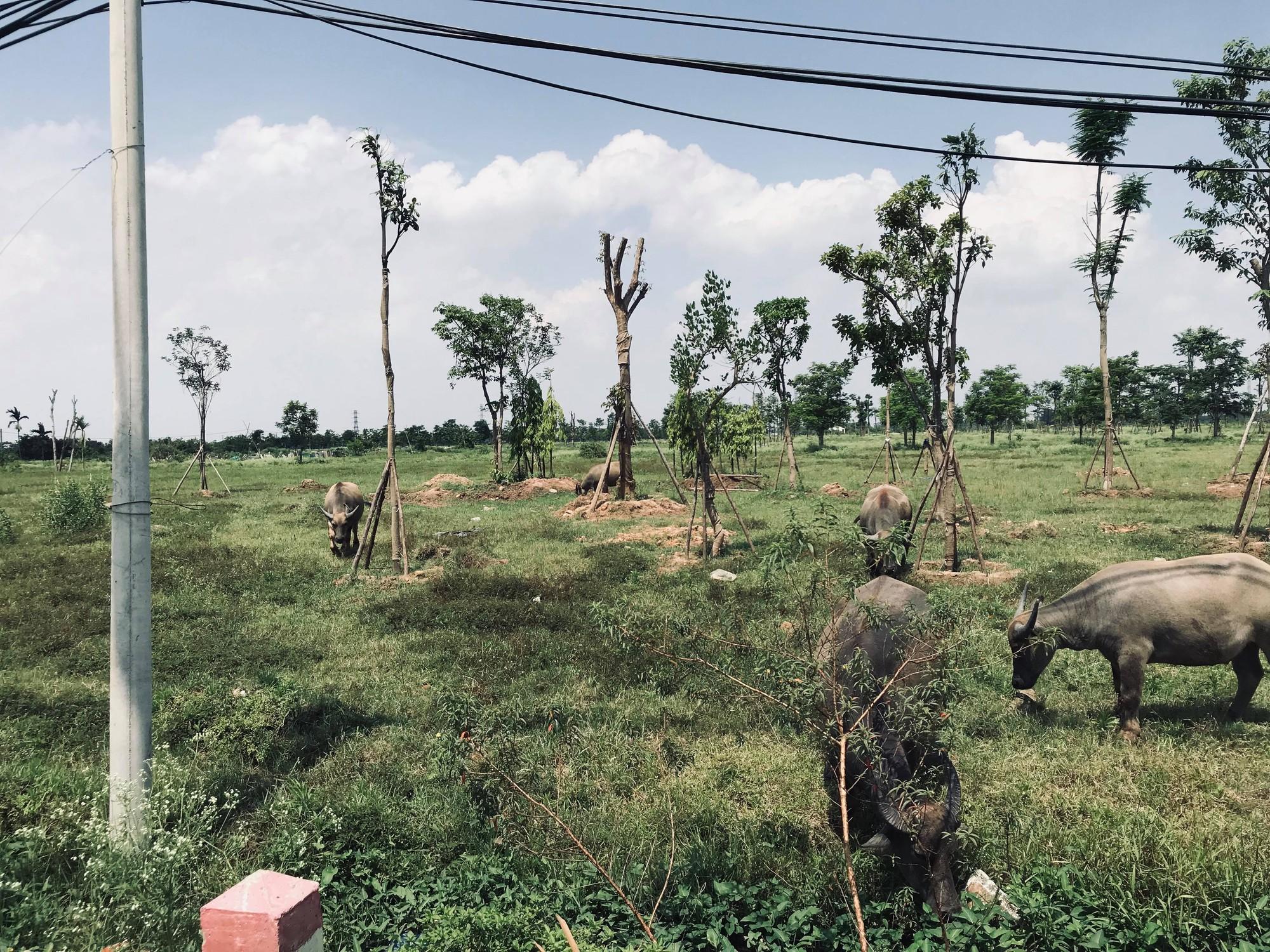 Hàng nghìn tỉ đồng bị chôn vùi tại khu đô thị bỏ hoang Minh Giang Đầm Và - Ảnh 16.