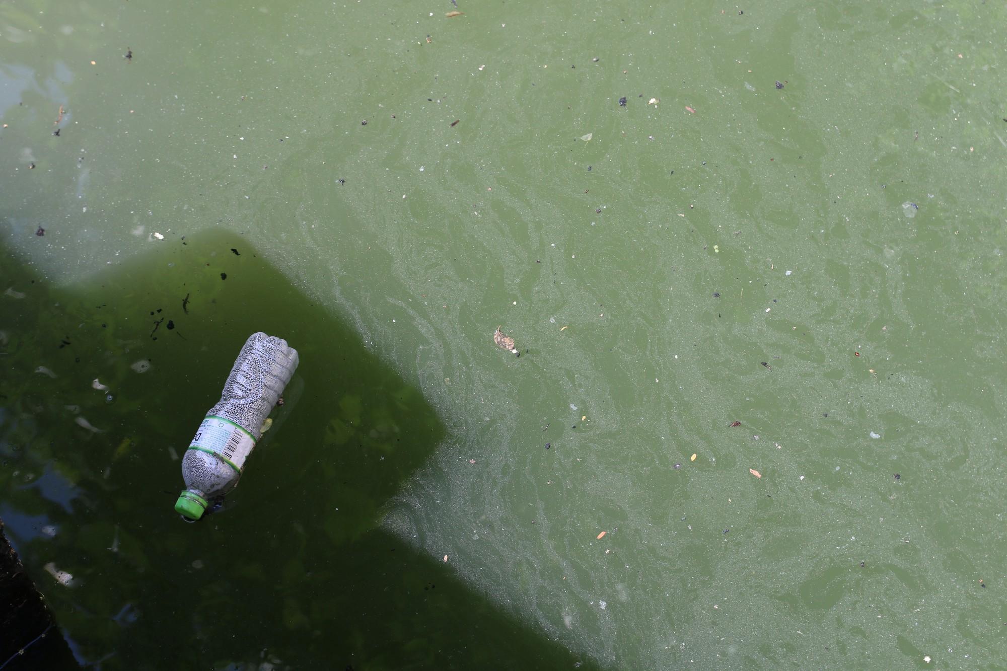 Khách du lịch nín thở vì nước thải, ô nhiễm ở Chùa Cầu Hội An - Ảnh 8.