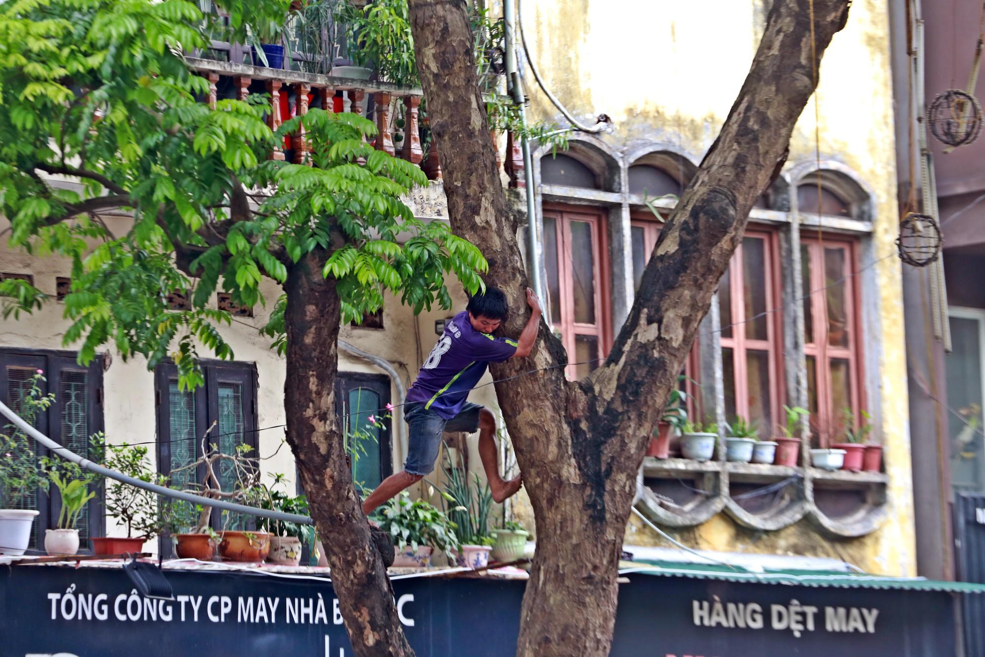Người nhện kéo nhau đi hái sấu trên phố Hà Nội, kiếm bạc triệu mỗi ngày - Ảnh 3.