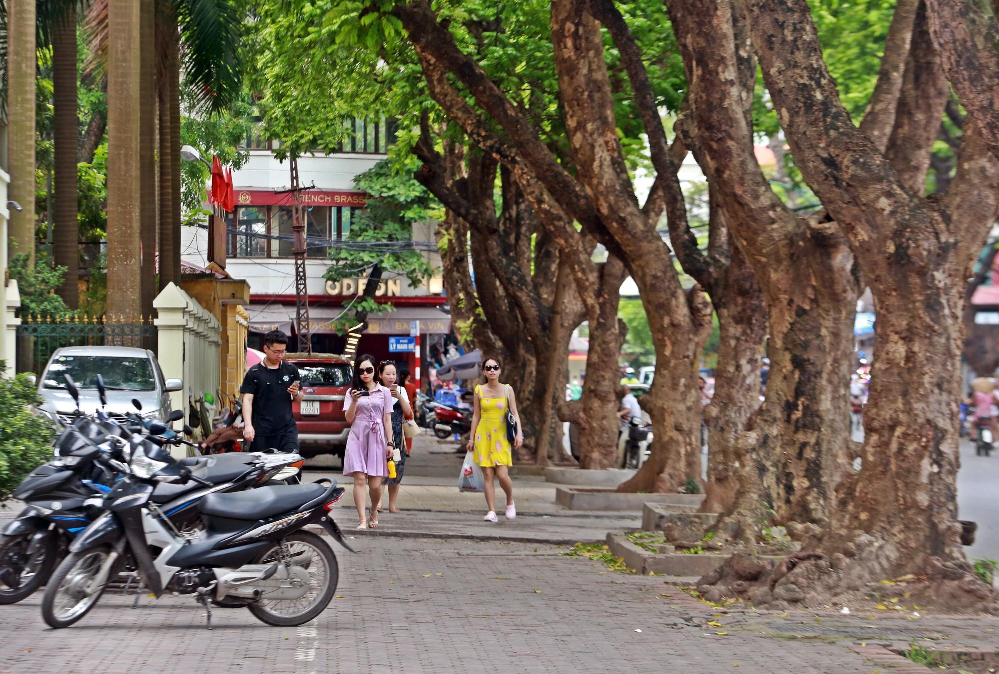 Người nhện kéo nhau đi hái sấu trên phố Hà Nội, kiếm bạc triệu mỗi ngày - Ảnh 1.