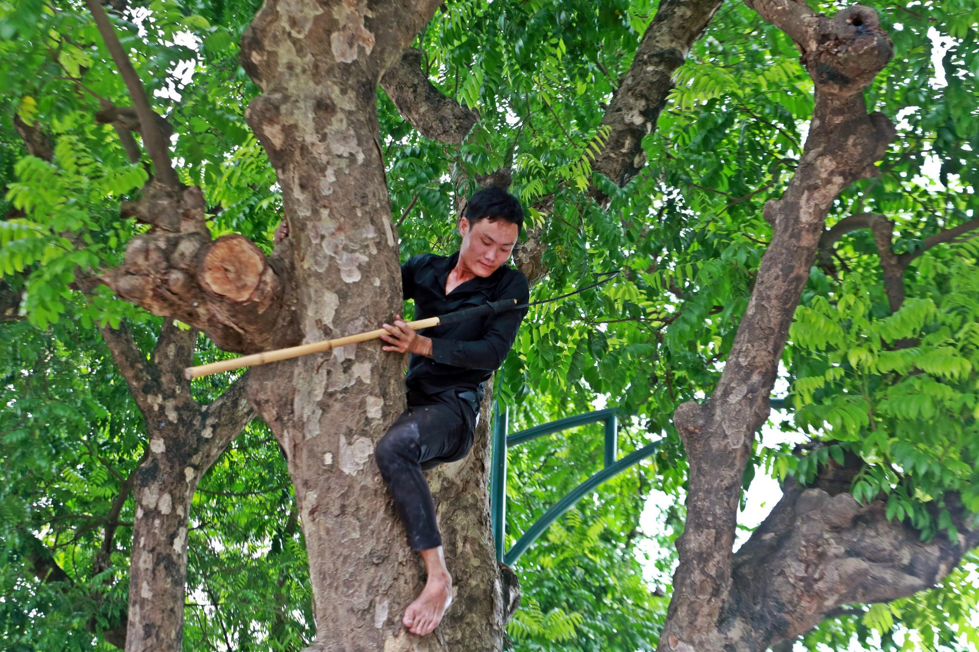 Người nhện kéo nhau đi hái sấu trên phố Hà Nội, kiếm bạc triệu mỗi ngày - Ảnh 8.