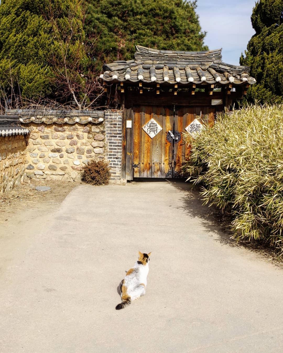 Thong thong khám phá văn hóa truyền thống tại 5 ngôi làng cổ đặc sắc nhất xứ Hàn - Ảnh 13.