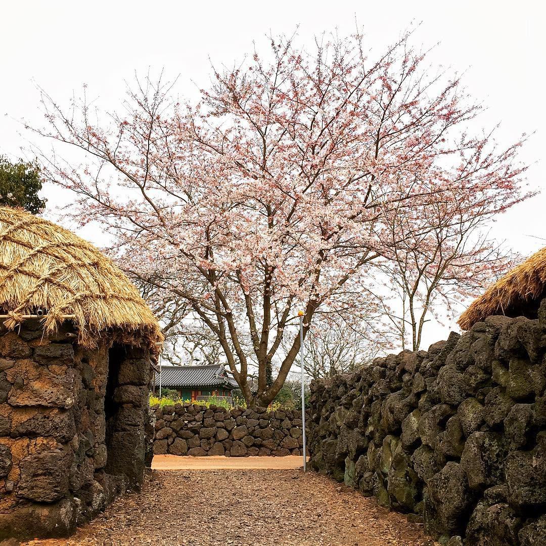 Thong thong khám phá văn hóa truyền thống tại 5 ngôi làng cổ đặc sắc nhất xứ Hàn - Ảnh 23.