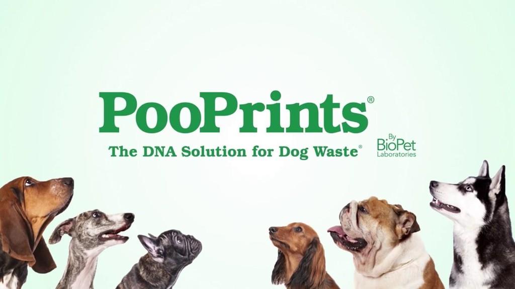 Thu nhập 7 triệu USD một năm nhờ xét nghiệm DNA phân chó - Ảnh 2.