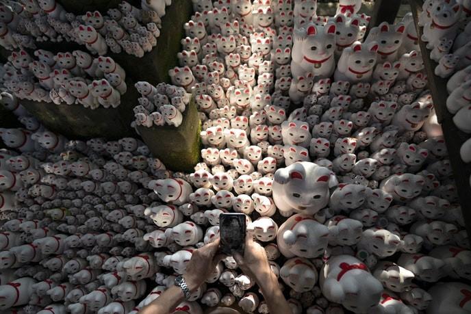 Bí mật tượng mèo may mắn bên trong ngôi đền ở Tokyo - Ảnh 3.