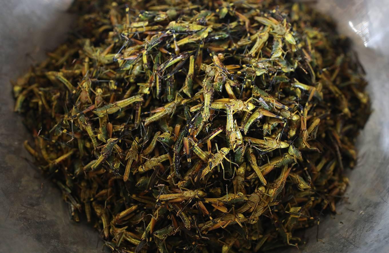 Chợ côn trùng ở vùng cao Tây Bắc - Ảnh 4.