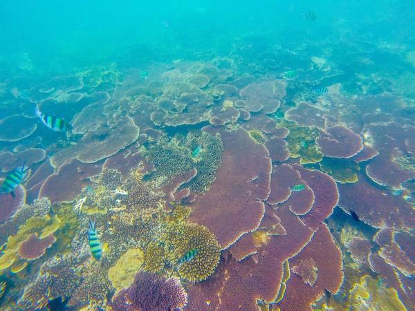 Corals-Belitung