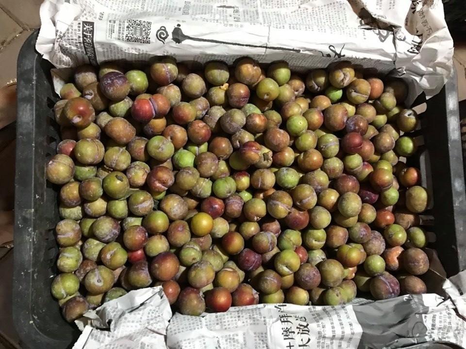 Lừa bán đặc sản Sa Pa, người Việt ăn hết 3.000 tấn mận Trung Quốc - Ảnh 1.