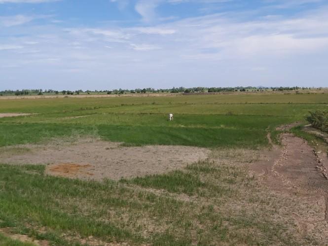 Tận thấy miền Tây trong đợt khô hạn nhất lịch sử - Ảnh 1.