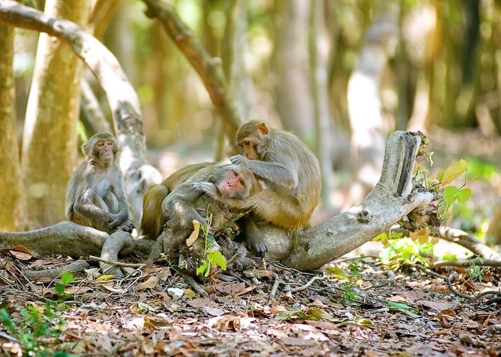 monkey-island-7
